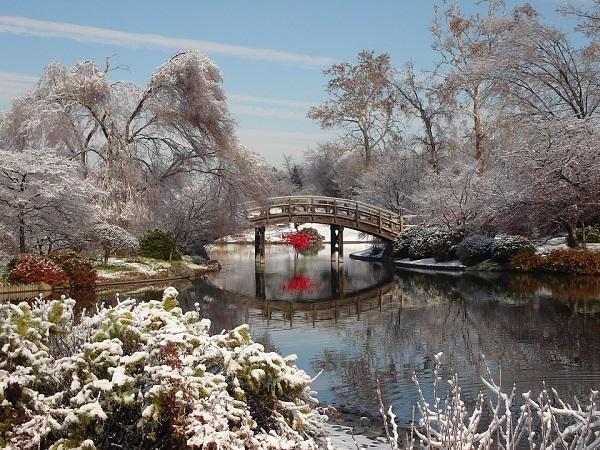 Jardin japonais en hiver