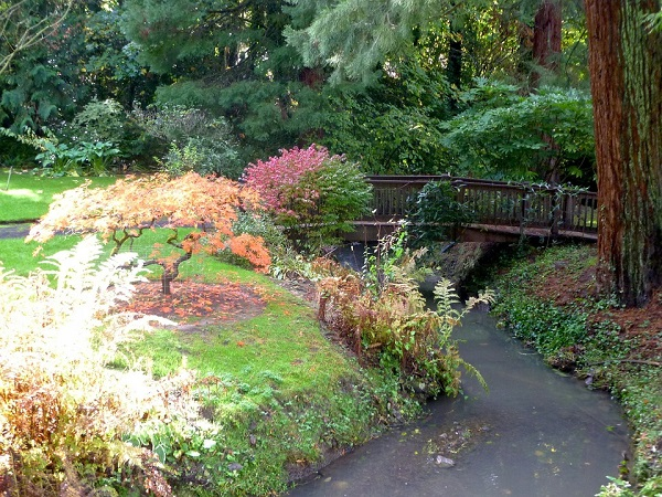 Jardin japonais aux plantes colorées avec une rivière et un pont